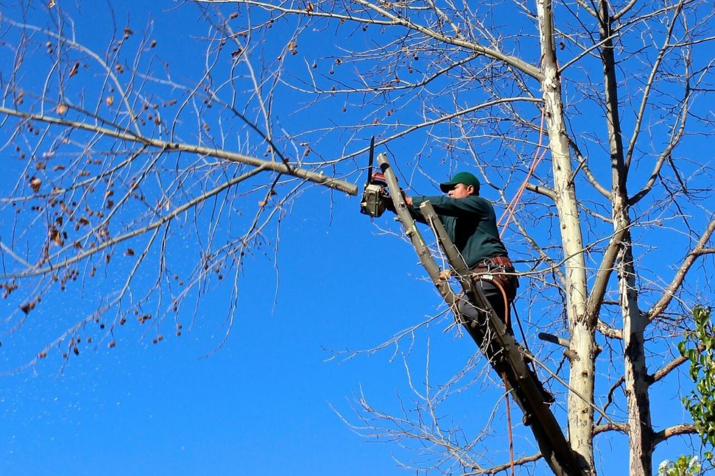 Contact Us-Mango FL Tree Trimming and Stump Grinding Services-We Offer Tree Trimming Services, Tree Removal, Tree Pruning, Tree Cutting, Residential and Commercial Tree Trimming Services, Storm Damage, Emergency Tree Removal, Land Clearing, Tree Companies, Tree Care Service, Stump Grinding, and we're the Best Tree Trimming Company Near You Guaranteed!