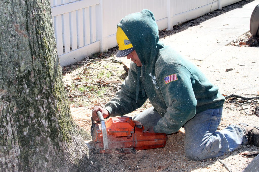 Mango FL Tree Trimming and Stump Grinding Services Home Page Image-We Offer Tree Trimming Services, Tree Removal, Tree Pruning, Tree Cutting, Residential and Commercial Tree Trimming Services, Storm Damage, Emergency Tree Removal, Land Clearing, Tree Companies, Tree Care Service, Stump Grinding, and we're the Best Tree Trimming Company Near You Guaranteed!