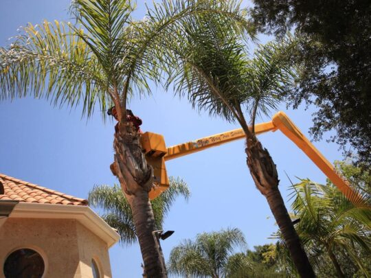 Palm Tree Trimming-Mango FL Tree Trimming and Stump Grinding Services-We Offer Tree Trimming Services, Tree Removal, Tree Pruning, Tree Cutting, Residential and Commercial Tree Trimming Services, Storm Damage, Emergency Tree Removal, Land Clearing, Tree Companies, Tree Care Service, Stump Grinding, and we're the Best Tree Trimming Company Near You Guaranteed!