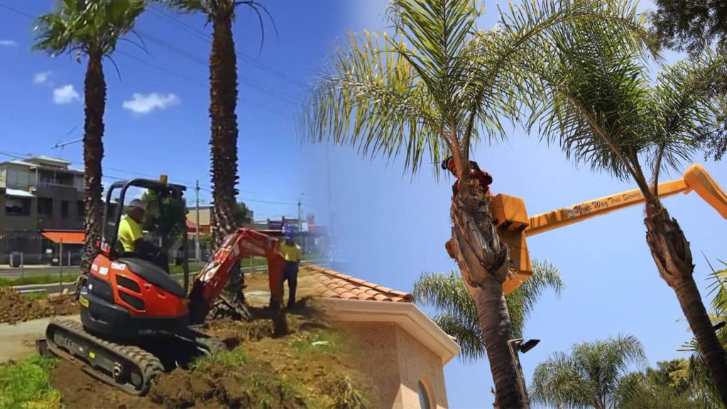 Palm tree trimming & palm tree removal-Mango FL Tree Trimming and Stump Grinding Services-We Offer Tree Trimming Services, Tree Removal, Tree Pruning, Tree Cutting, Residential and Commercial Tree Trimming Services, Storm Damage, Emergency Tree Removal, Land Clearing, Tree Companies, Tree Care Service, Stump Grinding, and we're the Best Tree Trimming Company Near You Guaranteed!