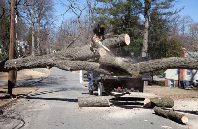 Residential Tree Services-Mango FL Tree Trimming and Stump Grinding Services-We Offer Tree Trimming Services, Tree Removal, Tree Pruning, Tree Cutting, Residential and Commercial Tree Trimming Services, Storm Damage, Emergency Tree Removal, Land Clearing, Tree Companies, Tree Care Service, Stump Grinding, and we're the Best Tree Trimming Company Near You Guaranteed!