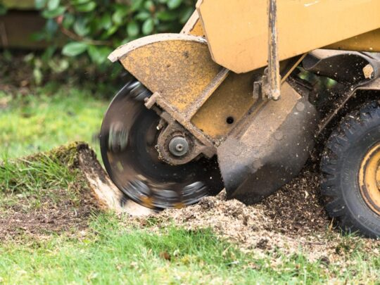 Stump Grinding-Mango FL Tree Trimming and Stump Grinding Services-We Offer Tree Trimming Services, Tree Removal, Tree Pruning, Tree Cutting, Residential and Commercial Tree Trimming Services, Storm Damage, Emergency Tree Removal, Land Clearing, Tree Companies, Tree Care Service, Stump Grinding, and we're the Best Tree Trimming Company Near You Guaranteed!