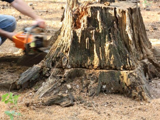 Stump Removal-Mango FL Tree Trimming and Stump Grinding Services-We Offer Tree Trimming Services, Tree Removal, Tree Pruning, Tree Cutting, Residential and Commercial Tree Trimming Services, Storm Damage, Emergency Tree Removal, Land Clearing, Tree Companies, Tree Care Service, Stump Grinding, and we're the Best Tree Trimming Company Near You Guaranteed!