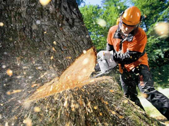 Tree Cutting-Mango FL Tree Trimming and Stump Grinding Services-We Offer Tree Trimming Services, Tree Removal, Tree Pruning, Tree Cutting, Residential and Commercial Tree Trimming Services, Storm Damage, Emergency Tree Removal, Land Clearing, Tree Companies, Tree Care Service, Stump Grinding, and we're the Best Tree Trimming Company Near You Guaranteed!
