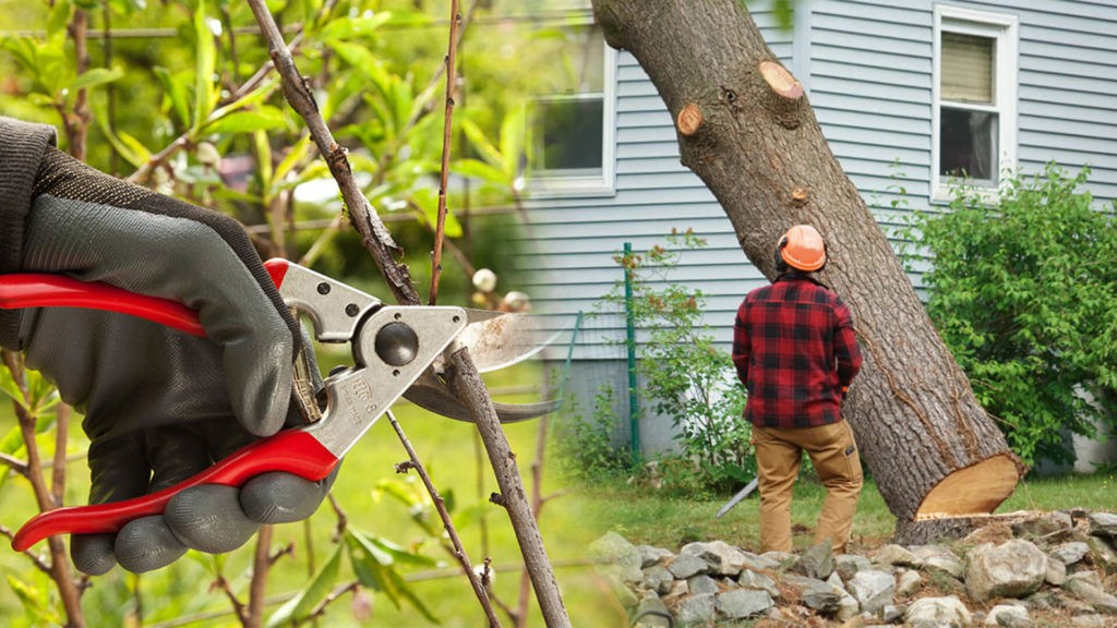 Tree pruning & tree removal-Mango FL Tree Trimming and Stump Grinding Services-We Offer Tree Trimming Services, Tree Removal, Tree Pruning, Tree Cutting, Residential and Commercial Tree Trimming Services, Storm Damage, Emergency Tree Removal, Land Clearing, Tree Companies, Tree Care Service, Stump Grinding, and we're the Best Tree Trimming Company Near You Guaranteed!
